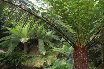 Ferns by Paul Gillard