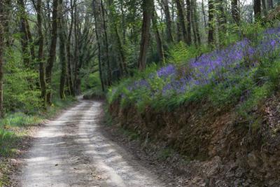 Quiet Countryside Lane by Paul Gillard