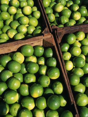 Boxes of Limes, Oxkutzcab Market, Yucatan, Mexico by Paul Harris