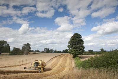 Combine Harvester Harvesting Oats (Avena Sativa), Haregill Lodge Farm, Ellingstring,Yorkshire, UK