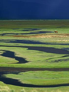 Steppeland, A Lone Horse Herder Out on the Steppeland, Mongolia by Paul Harris