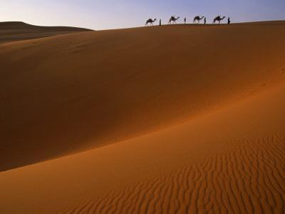 Tenere Desert, Camel Caravan Travelling Through the Air Mountains and Tenere Desert, Niger by Paul Harris
