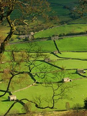 Traditional Farming Valley in Swaledale, Yorkshire Dales National Park, England by Paul Harris