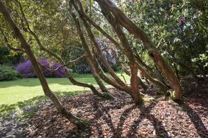 Trewithen Gardens, Near Truro, Cornwall, England by Paul Harris