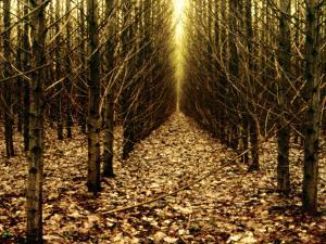 Forest of Trees with Infinite Pathway by Paul Hernandez