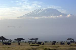 Elephants in Front of Mount Kilimanjaro, Kenya by Paul Joynson