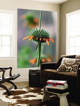 Flower known Locally as Flor De Cardo by Paul Kennedy