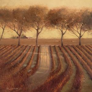 Vintage Sunlit Vineyard by Paul Mathenia