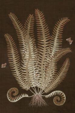 Ferns in Roasted Brown III by Paul Montgomery