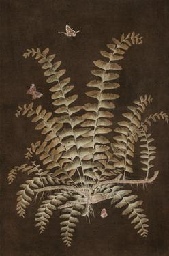 Ferns in Roasted Brown V by Paul Montgomery