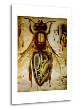 Anatomy of the Honey Bee, No.13, Pfurtscheller's Zoological Wall Chart by Paul Pfurtscheller