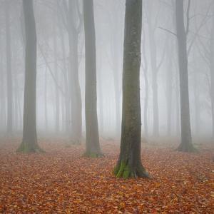 Beech Woodland in the Autumn Mist by Paul Simon Wheeler Photography