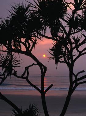 Palms and Beach at Sunrise, Bundjalung National Park, New South Wales, Australia by Paul Sinclair