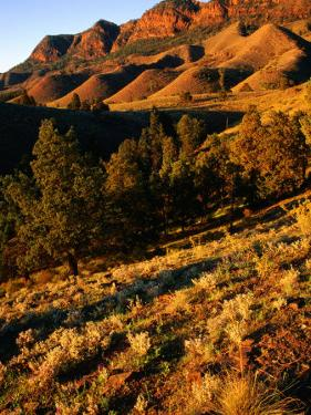 Section of Aroona Valley, Flinders Ranges National Park, Australia by Paul Sinclair