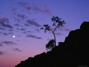Section of Larapinta Trail Silhouetted in Evening, West Macdonnell National Park, Australia by Paul Sinclair