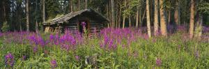 Abandoned Cabin and Fireweed, Ross River Area, Yukon, Canada by Paul Souders