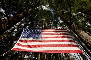 American Flag in Forest, Washington by Paul Souders