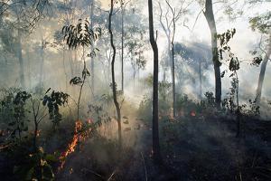 Australian Bush Fire by Paul Souders