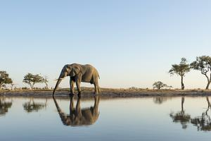 Botswana, Chobe NP, African Elephant at Water Hole in Savuti Marsh by Paul Souders