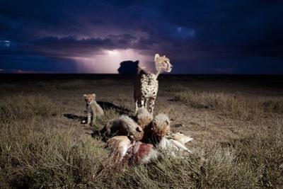 Cheetah and Lightning Storm, Ngorongoro Conservation Area, Tanzania by Paul Souders
