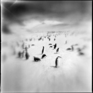 Chinstrap Penguins, Antarctica by Paul Souders