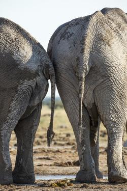 Elephant at Water Hole, Nxai Pan National Park, Botswana by Paul Souders