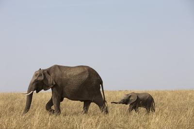 Elephants and Calf in Savanna by Paul Souders