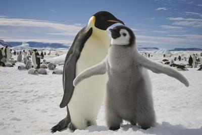 Emperor Penguin and Chick in Antarctica