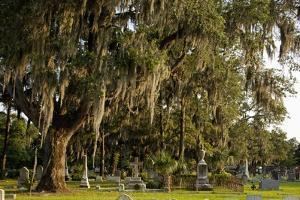 Gravestones and Trees Draped in Spanish Moss in Bonaventure Cemetery, Savannah, Georgia by Paul Souders