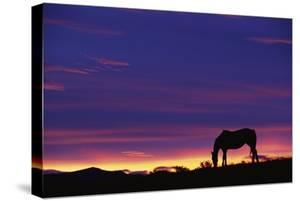 Horse Silhouette at Sunset by Paul Souders