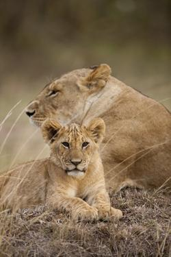 Lioness and Cub by Paul Souders
