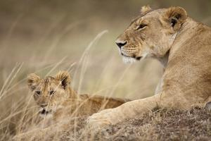 Lioness with Cub in Masai Mara National Reserve by Paul Souders