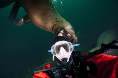 Self Portrait of Photographer with a Steller Sea Lion About to Bite His Head by Paul Souders