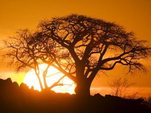Silhouetted Baobab Trees, Kubu Island on Makgadikgadi Pan, Kalahari Desert, Botswana by Paul Souders