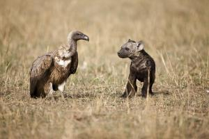 Spotted Hyena Pup and Whitebacked Vulture by Paul Souders