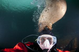 Steller Sea Lion Biting Head of Photographer Paul Souders by Paul Souders