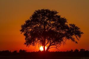 Sunset, Savuti Marsh, Chobe National Park, Botswana by Paul Souders
