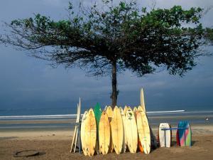 Surfboards Lean Against Lone Tree on Beach in Kuta, Bali, Indonesia by Paul Souders