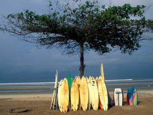 Surfboards Lean Against Lone Tree on Beach in Kuta, Bali, Indonesia by Paul Souders