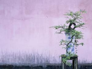 Tree in Vase and Pink Wall by Paul Souders