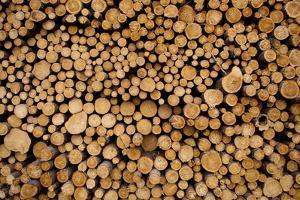USA, Michigan, Gulliver, Stacked piles of cut logs at Zellar Forest Products by Paul Souders