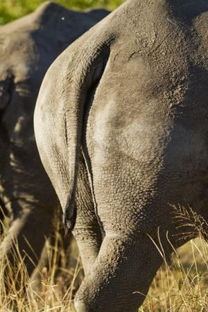 White Rhino Tail, Sabi Sabi Reserve, South Africa by Paul Souders