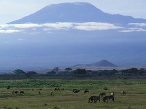Zebra and Wildebeest under Mt. Kilimanjaro, Amboseli National Park, Kenya by Paul Souders
