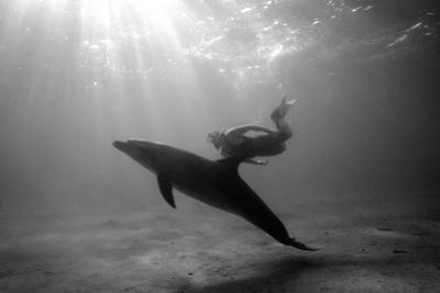 A Black and White Image of a Bottlenose Dolphin and Snorkeller Interacting Contre-Jour by Paul Springett
