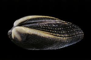 Arca Navicularis by Paul Starosta
