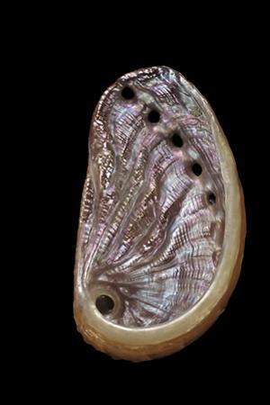Haliotis Tuberculata by Paul Starosta