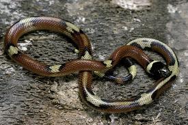 Affordable Snakes (Color Photography) Framed Art for sale at