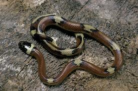 Affordable Snakes (Color Photography) Art for sale at AllPosters com