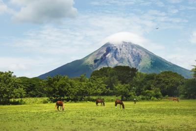 Concepcion Volcano with Grazing Horses