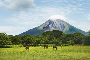 Concepcion Volcano with Grazing Horses by Paul Taylor